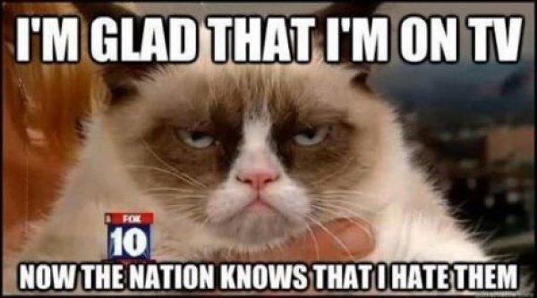 Grumpy Nation. This cat. :3. Grumpy cat TV broadcast