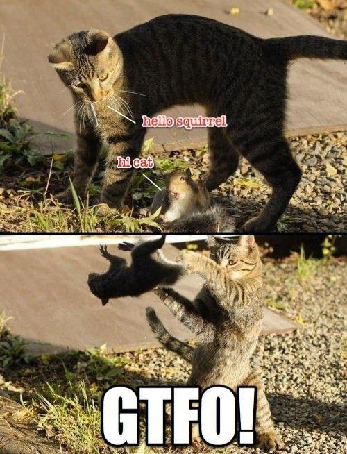GTFO Squirrel. ninja flip (not mine i just found it on google). cat Ninja Squirrel