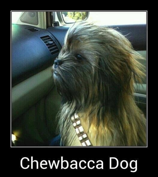 Gwaaaaaaaaaaaaaaarrrrrggggllll!. . Chewbacca Dog Gwaaaaaaaaaaaaaaarrrrrggggllll! Chewbacca Dog
