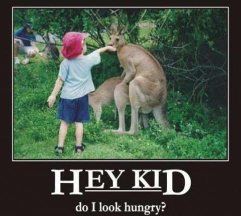 kangaroo time. www.lulzpitbullz.com. do I look hungry? penguins shit in my WHEELIEBIN but Anon Raped kitteh for da lulz luluQ stole Underwear sniff
