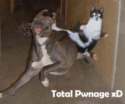 karate kitty. . karate kitty