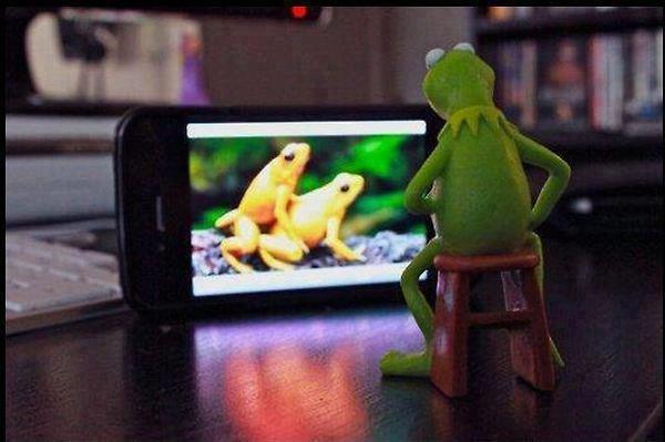Kermit you dirty frog!. . Kermit you dirty frog!
