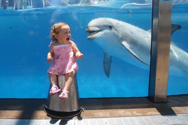 Kids love animals. .. I need to sleep. dolphin kids