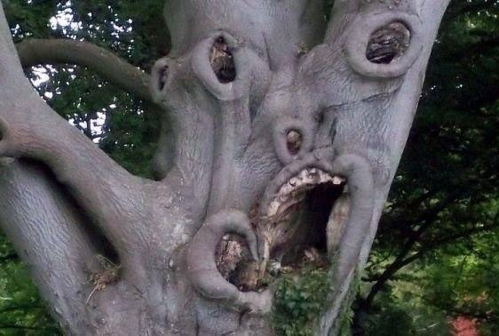 Kill me. . funny weird looking Tree
