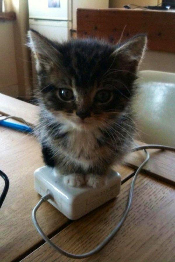 Kitten Warmer. . Kitten Warmer