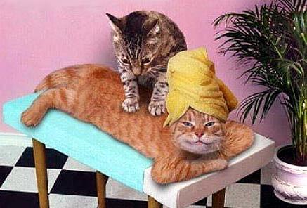Kitty Massage. .. off! cats hate u! Massage Cats Photoshop