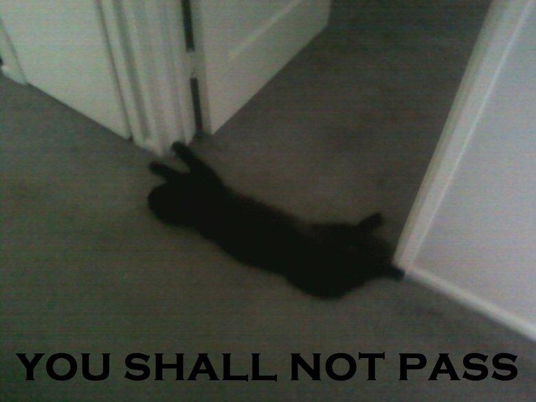 kitty says so. .. . kitty says so