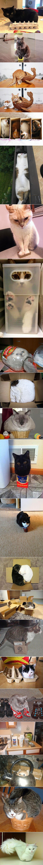kittys. . Snack em kittys Snack em