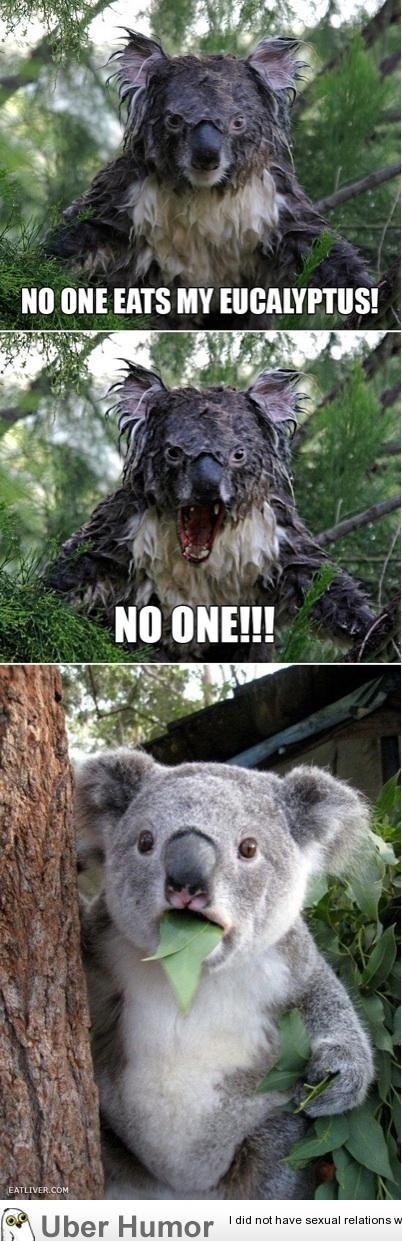Koala. creds to uberhumor.com. PM thit HITS MY q ts CDM tital U 'mri H J. ?, r I did nut sexual reflations. pic related, i felt the need to post it Koala creds to uberhumor com PM thit HITS MY q ts CDM tital U 'mri H J ? r I did nut sexual reflations pic related i felt the need post it