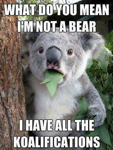 Koala wants. . Koala wants