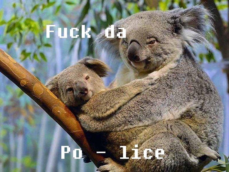 Koala. Description. none