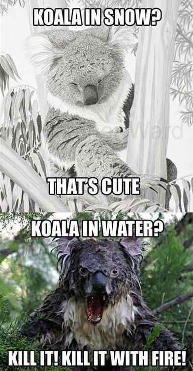 """Koala. . ill"""" IT! ' IT WITH TIRE! Koala ill"""" IT! ' IT WITH TIRE!"""