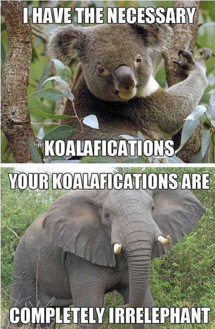 "Koalafications. . paye' . everr"". Haah, i lolled :P Koalafications paye' everr"" Haah i lolled :P"