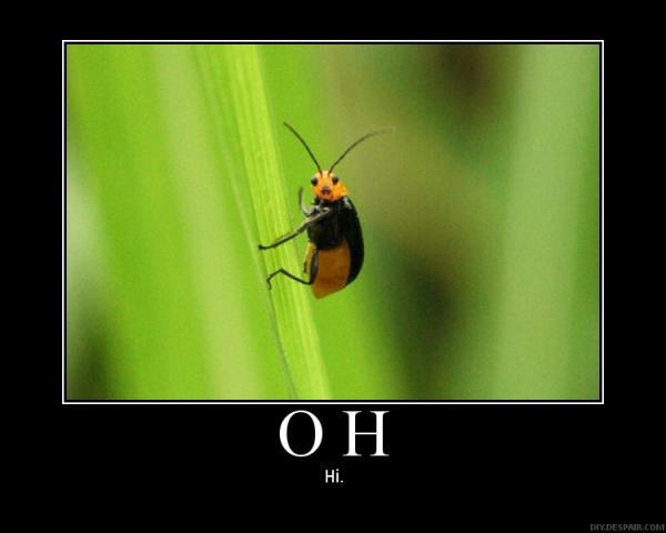 Oh, hi!. .. lol imagine what that would look like from the bugs point of view.... Oh hi! lol imagine what that would look like from the bugs point of view