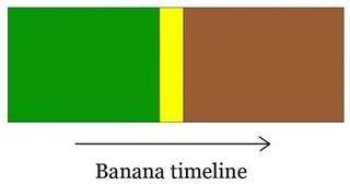 Oh look, they're ripe!. Aaaaaaaaaand it's gone. Banana Emeline Oh look they're ripe! Aaaaaaaaaand it's gone Banana Emeline
