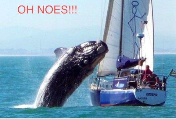 "OH NOES. .. guy on boat: ""FUUUUUUUUUUUU"" OH NOES guy on boat: ""FUUUUUUUUUUUU"""