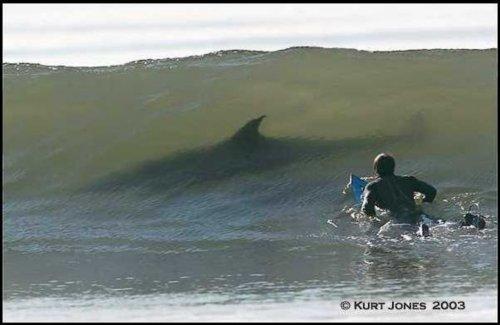 oh damn. . .. duh-nuh duh-nuh duh-nuh duh-nuh.. LOOK AT THE SIZE OF THAT FCKIN' DOLPHIN!!!!1! Shark and Surfer