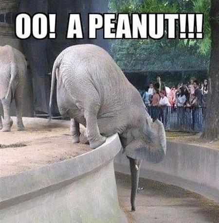 oo! a peanut!!!. . oo! a peanut!!!