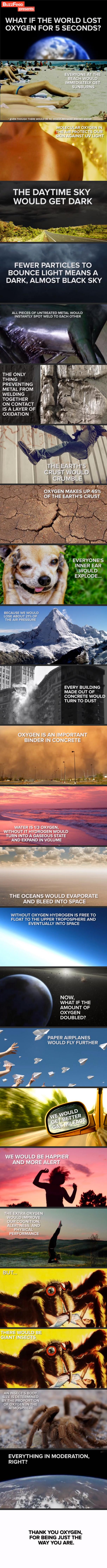oxygen is important. .. Aren't spiders arachnids? oxygen is important Aren't spiders arachnids?