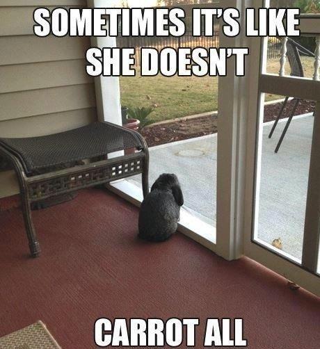 Sad Bunny. Bu-Dum-Tss Tags have boobs. ltt l' drake and Josh