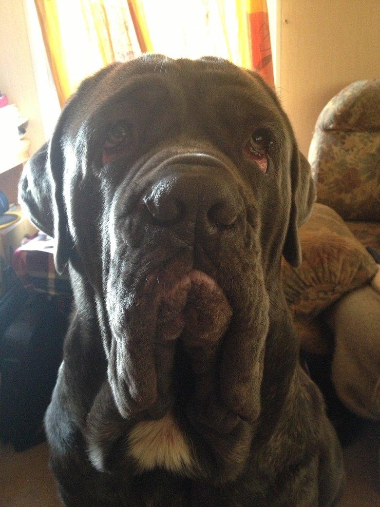 sad dog is sad. give him a treat.. Jesus Christ it look like his eyes are melting sad Dog