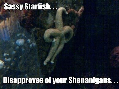 Sassy starfish. . sassy Starfish. . my at your Shenanigans. . .. Saved Sassy starfish sassy Starfish my at your Shenanigans Saved