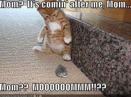 scardie cat. . scardie cat