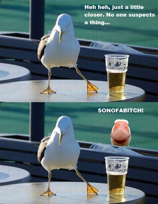 Seagull. . I Heh heh, just a little senser. his ans suspects. rolls 9 Seagull I Heh heh just a little senser his ans suspects rolls 9