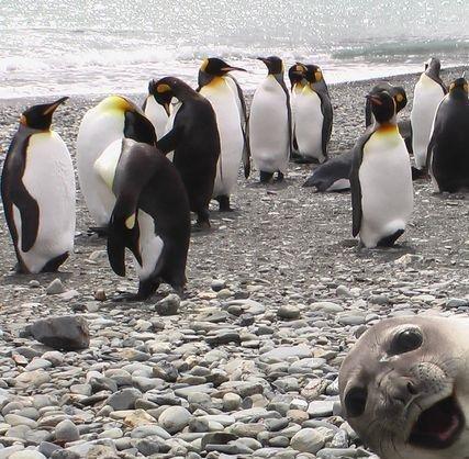 Seal Photobomb. fdjhf.. Hello :3 mrjjjj