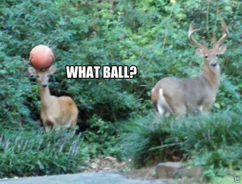 Seen my ball?. . Milt' f Seen my ball? Milt' f