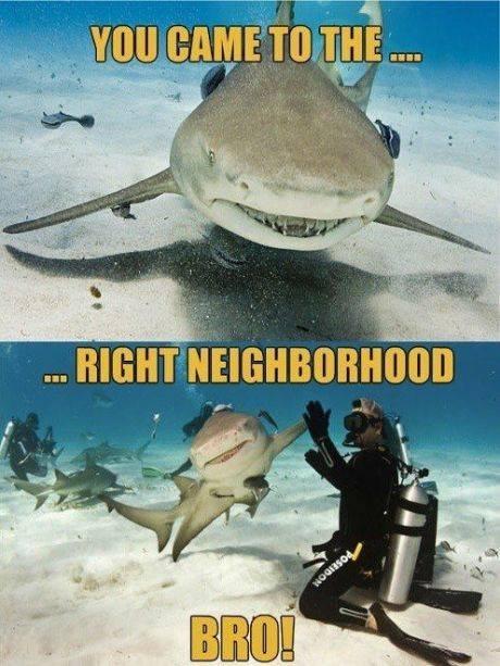 Shark Bro. . ll trt., ht mm _llooll. llr, ( Animals Shark brofist right Neighborhood