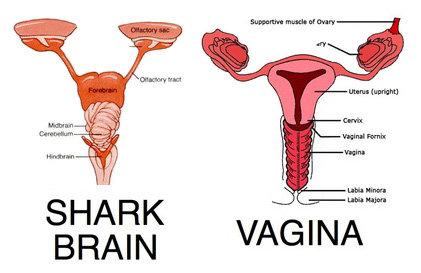 SHARK BRAIN. This made me chuckle..... yup Shark Brain woman vagina