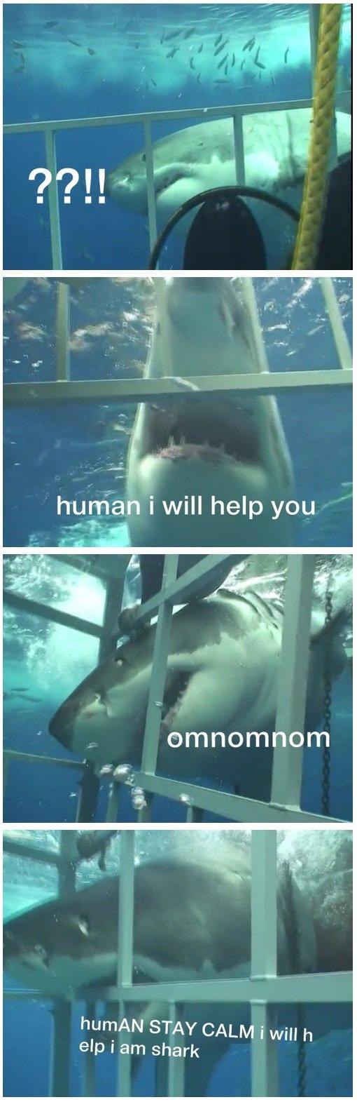 shark. . shark