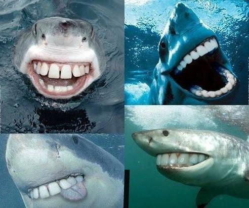 Sharks.. . Sharks