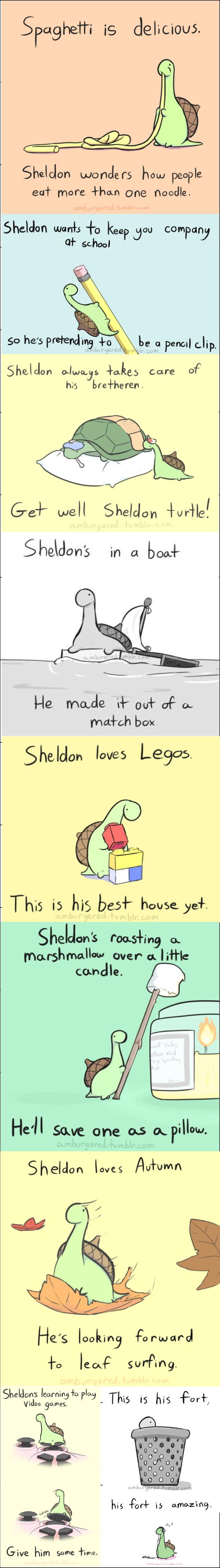 Sheldon the tiny dinosaur 2. /funny_pictures/4604525/Sheldon+the+t... All credit to Amburgered amburgered.tumblr.com/. Sheldon Turtle adorablness spoons hi
