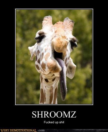 shroomz. . Giraffe