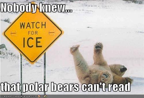 Silly polar bear. polar bears are fluffy and cuddly. Polar Bear slip funny