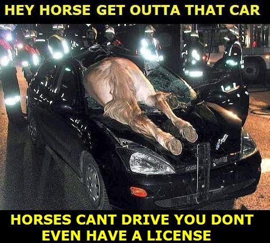 Silly Horses. Damn horses .. thats horrible... horses Cars crashes funny