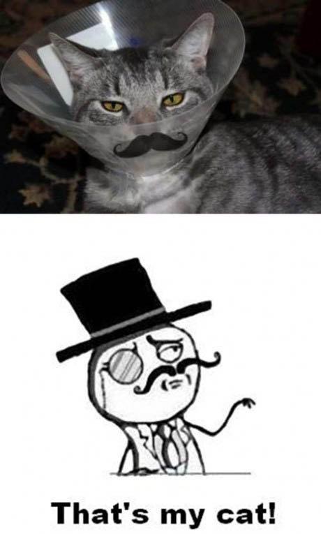 Sir cat.. . That' s my cat!. ok... Sir cat That' s my cat! ok