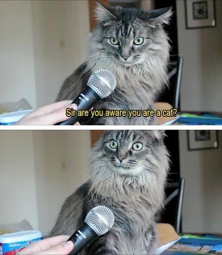 Sir.. YFW. lol funny Cats sir wait wat