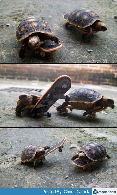 Skateboaders. So cute (:havn't seen here before credit to memez. Paste : R cute turtles