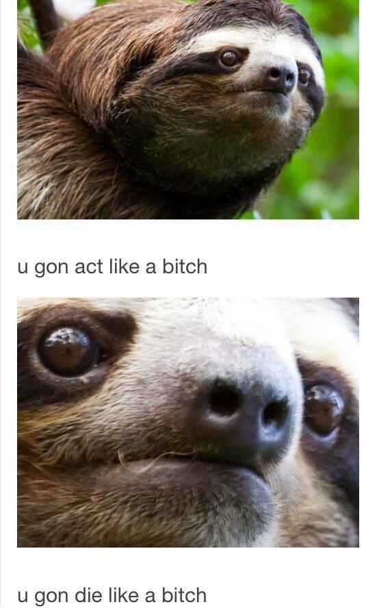 Sloth. . u gen die like .rial bitch Sloth u gen die like rial bitch