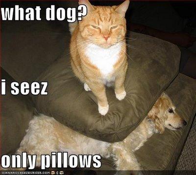 Smart Cat?. . what tlok Smart Cat? what tlok