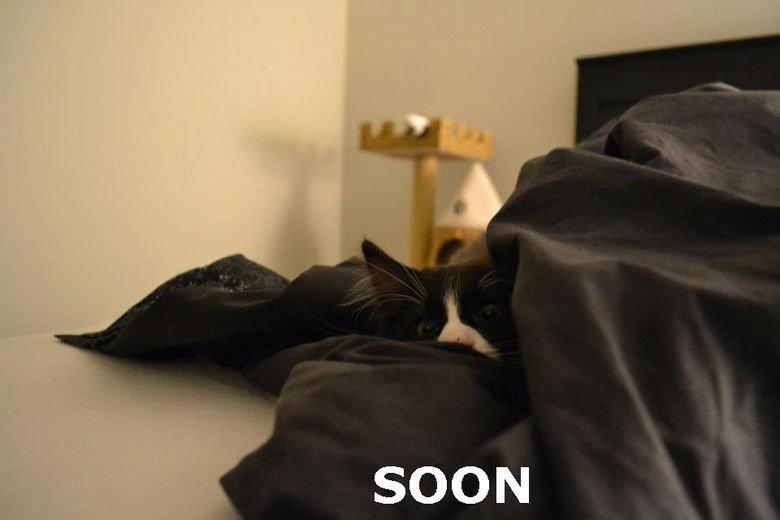 SOON. SOON.. soon soon