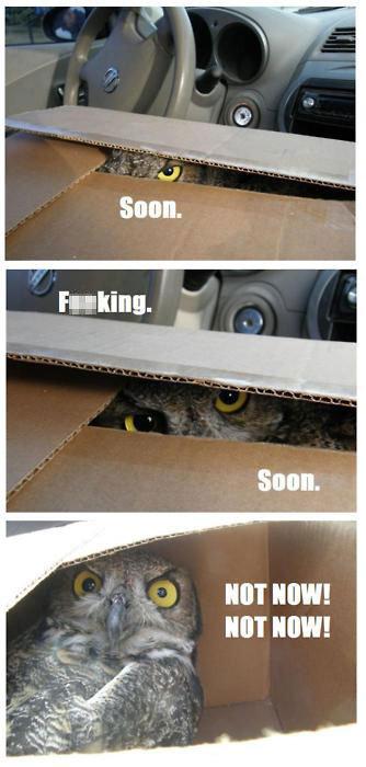 Soon. Soon owl..... maybe not. soon owl