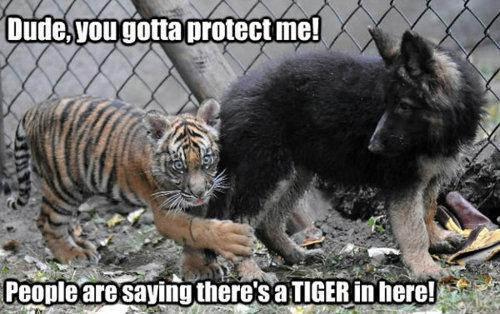 Sooo cute. . I'll Mia protect me. Sooo cute I'll Mia protect me