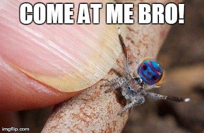 spider bro. . spider bro