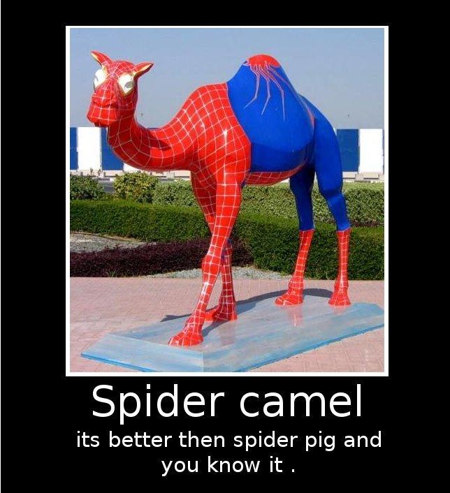 "Spider camel. spider camel spider camel does what ever a spider camel does <br /> bla bla bla bla bla bla you know the rest. Spider 'i:: yar"" ruhig its be spider camel Spiderman spiderpig spidercamel lol funny weird"