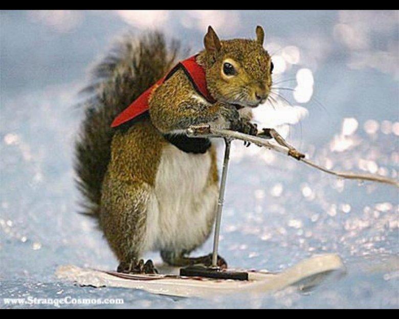 Squirely Squirrel. . Squirely Squirrel