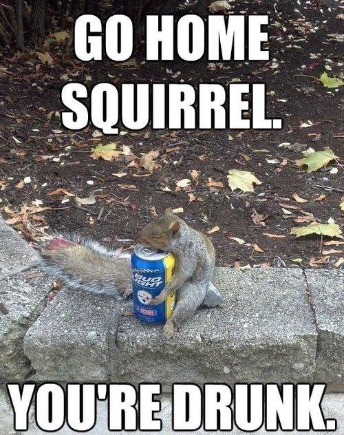 Squirrel life. Description here. squirrels drunk